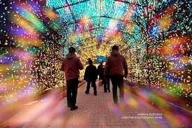 Gage Park Has a Light Tunnel This Year | Bramptonist
